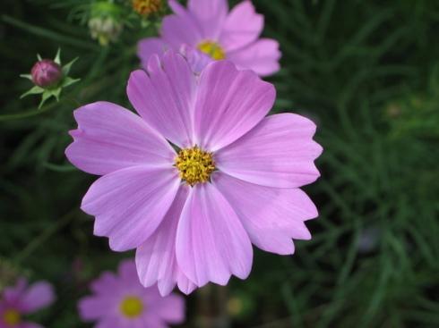 Flower Son Tran