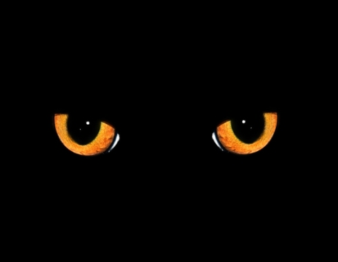 Ilker - Cat Eyes